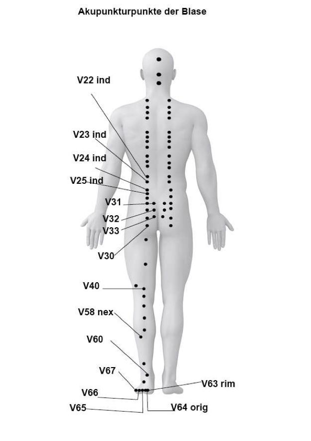 Akupunkturpunkte des Funktionskreises Blase