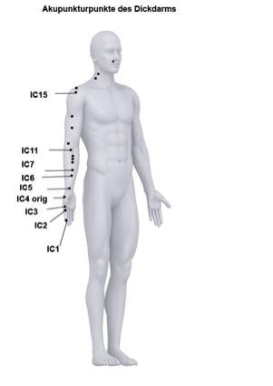 Akupunkturpunkte des Funktionskreises Dickdarm