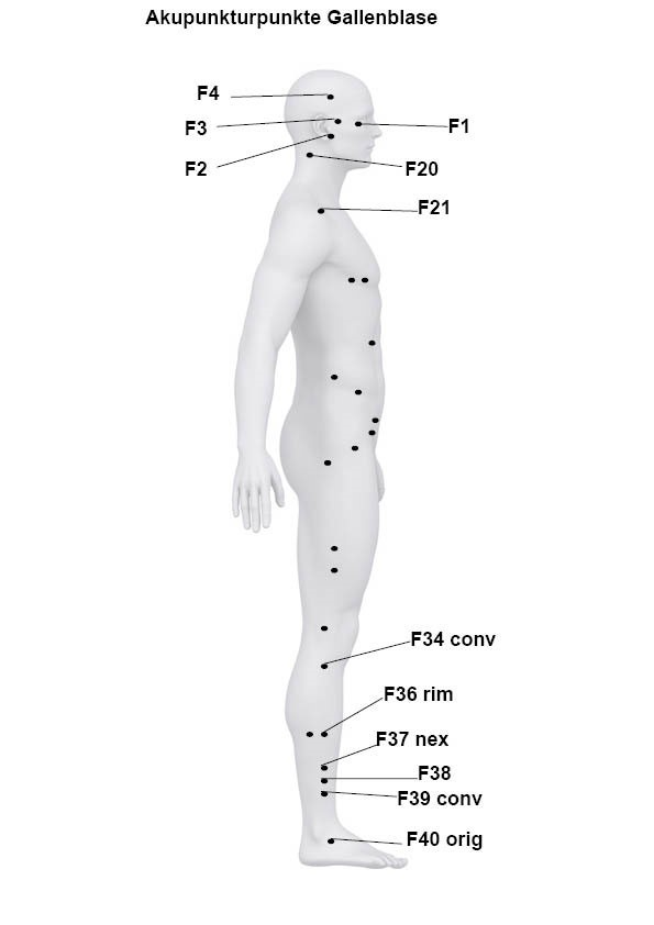 Akupunkturpunkte des Funktionskreises Gallenblase