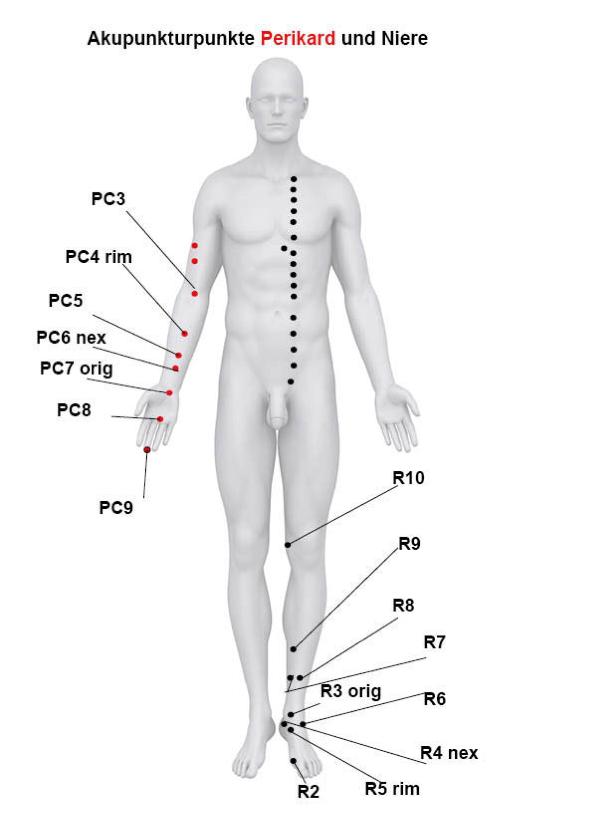 Akupunkturpunkte des Funktionskreises Herz