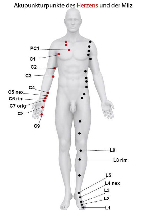 Akupunkturpunkte des Funktionkreises Milz