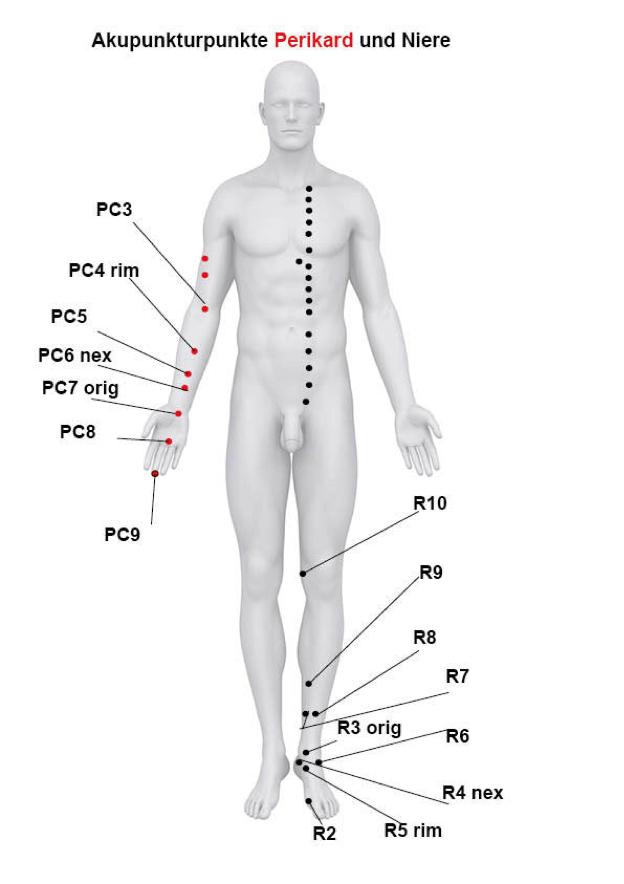 Akupunkturpunkte des Funkionskreises Niere